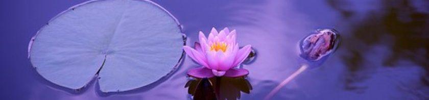 cropped-lotus-1205631__340.jpg